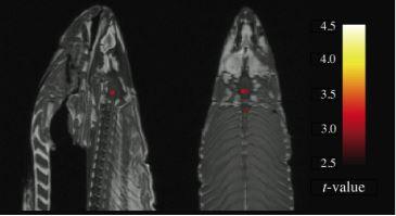 Forskning visar att död lax är empatisk